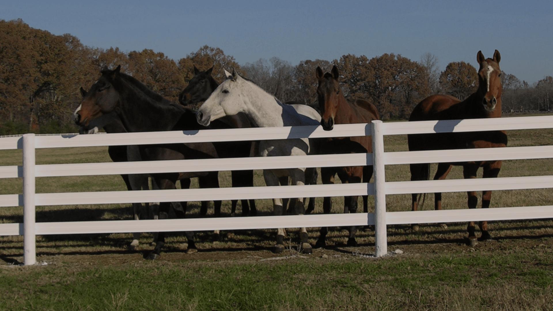 Circle 5 Horse Fence